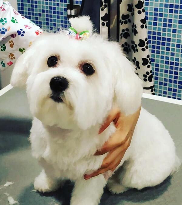 peinado perro mirasierra