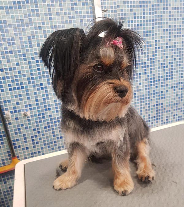 peluqueria de perros en mirasierra